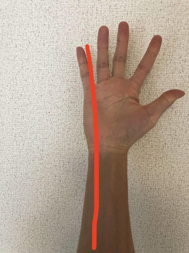 手のライン